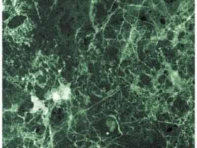 2427 S Мрамор зеленый
